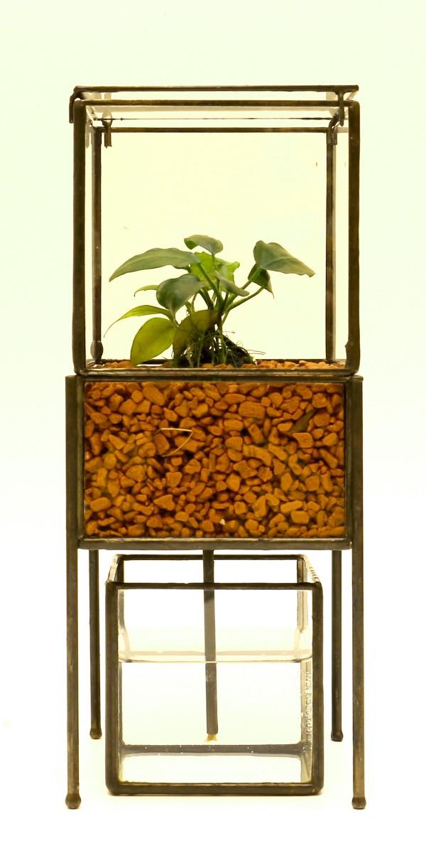 「PIPE TYPE PLANT GROWING DEVICE」 Planting : Anubias nana petit