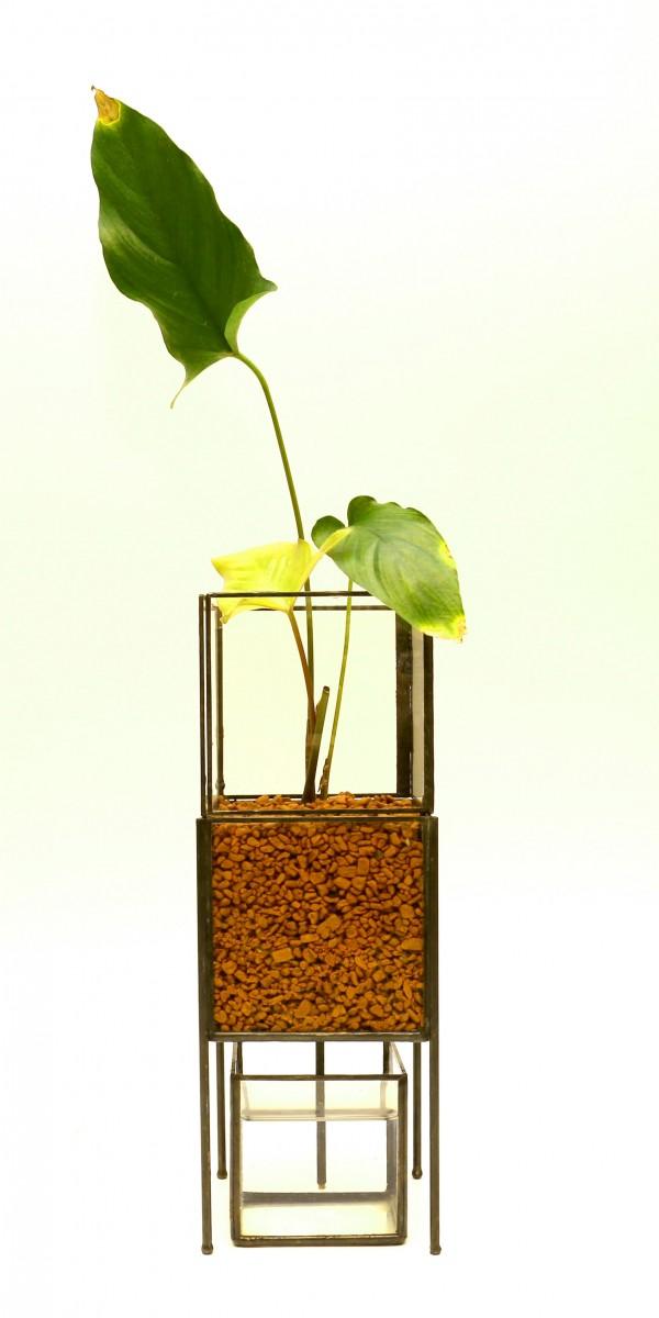 「PIPE TYPE PLANT GROWING DEVICE」 Planting : Anubias hasuti