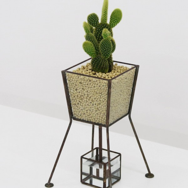 「PIPE TYPE PLANT GROWING DEVICE」 Planting : Opuntia