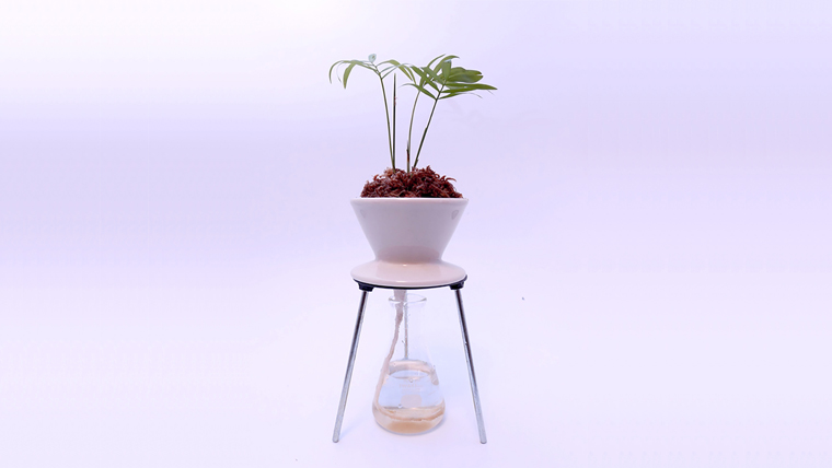 「CLASS B PLANT GROWING DEVICE」    Planting : Table palm