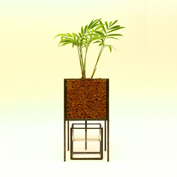「PIPE TYPE PLANT GROWING DEVICE」 Planting : Table palm