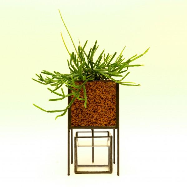 「PIPE TYPE PLANT GROWING DEVICE」 Planting : Ripusarisu