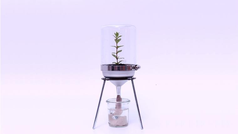 「CLASS B PLANT GROWING DEVICE」    Planting : Rudovijia