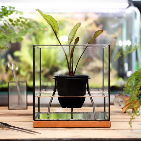 「BRICOLAGE PLANTER」    Planting : Echinodorus