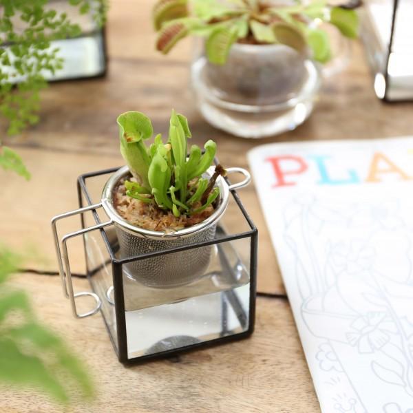 「BRICOLAGE PLANTER」    Planting : Sarracenia