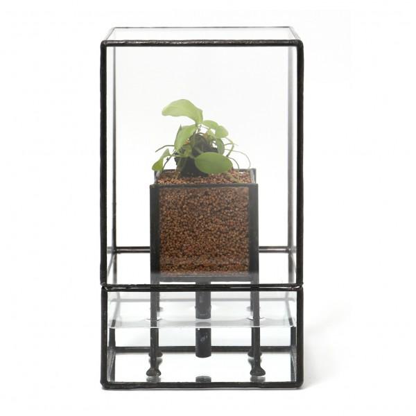 「STACK POT」    Planting : Anubias nana petit
