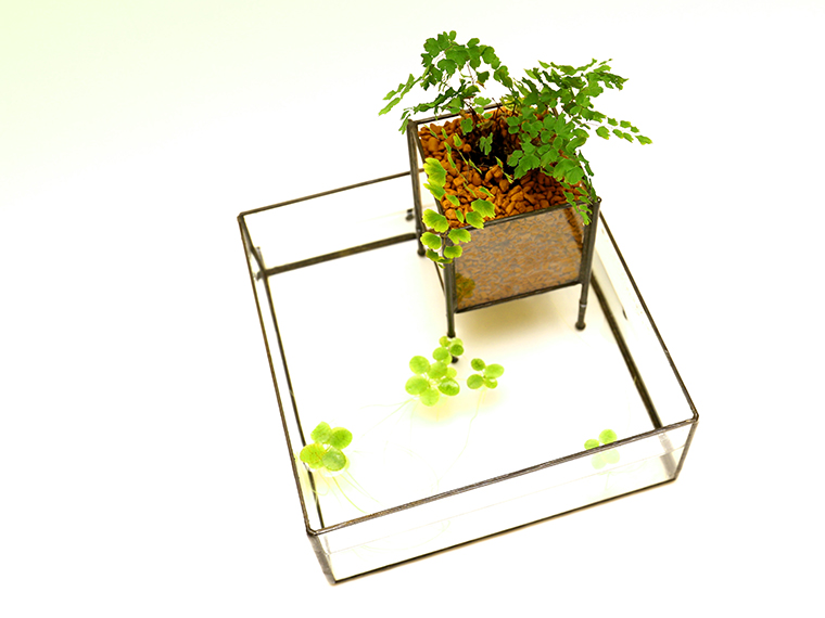 「PIPE TYPE PLANT GROWING DEVICE」 Planting : Asian tam