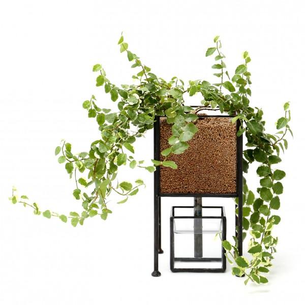 「STACK POT」    Planting : Ficus pumila