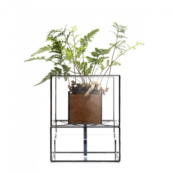 「STACK POT」    Planting : Humata tyermanii