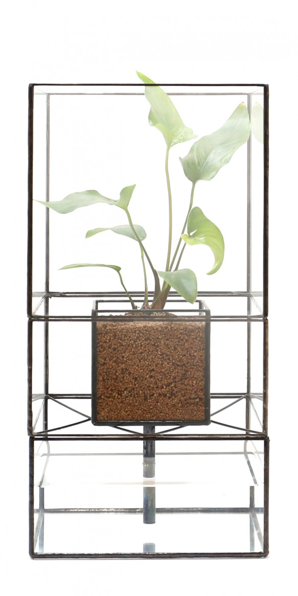 「STACK POT」    Planting : Anubias follower stay folia
