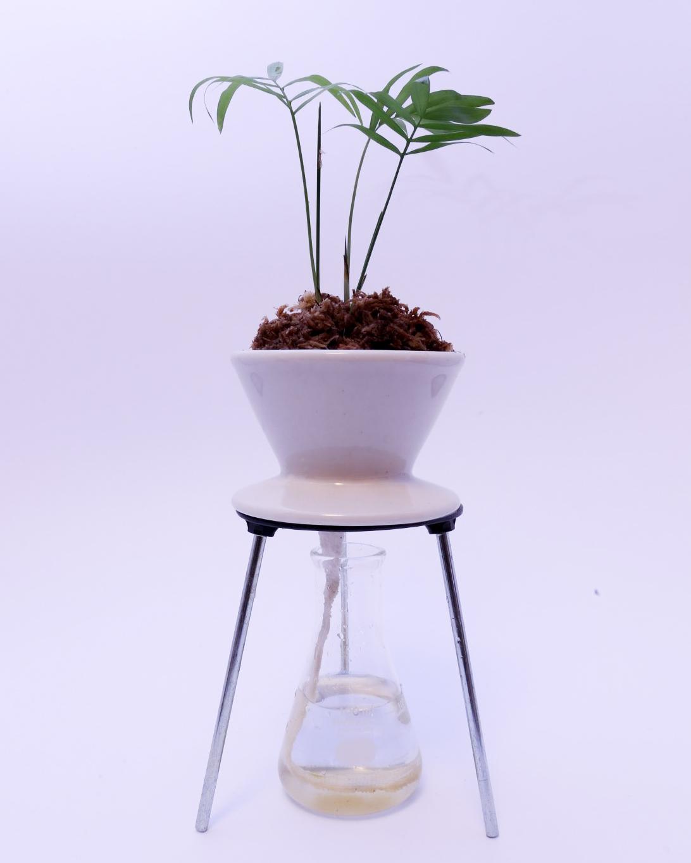 底面給水 PLANTS DESIGN テーブルヤシ 実験器具