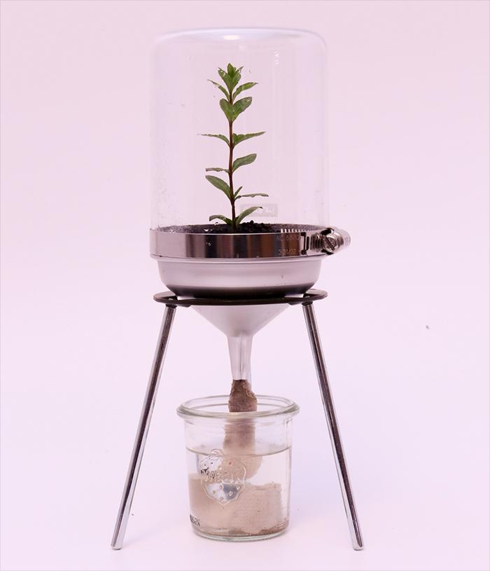 底面給水 PLANTS DESIGN 水草 水上 実験器具