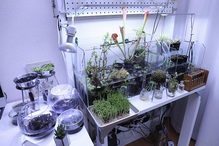 水耕栽培 食虫植物