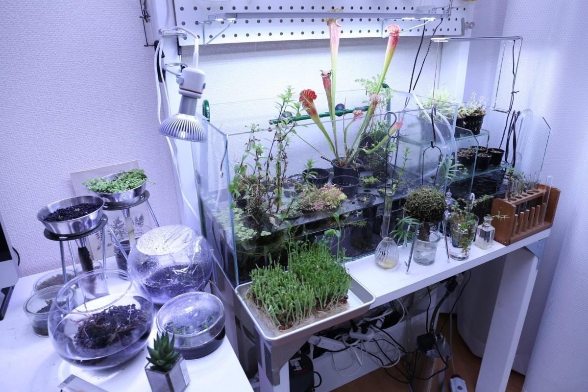 水耕栽培 食虫植物 水草