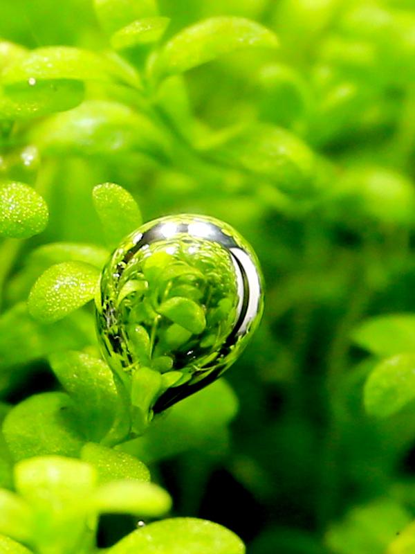 水草 気泡