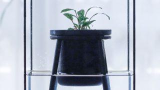 PLANTS DESIGN